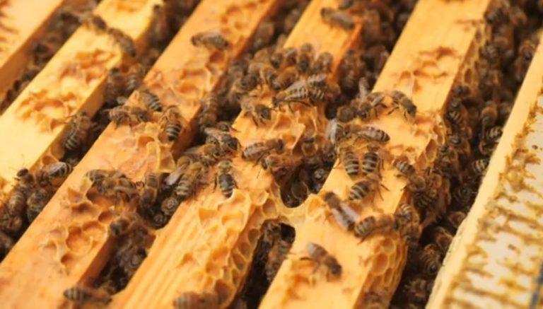 Weltbienentag am 20. Mai 2021 – Rettet die Bienen!